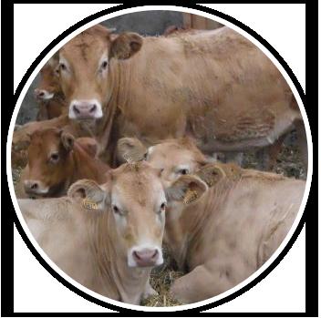 Vente de viande à la ferme près de Versailles (78)